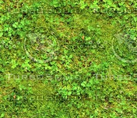 Grass with clover 2