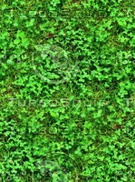 Grass with clover 19