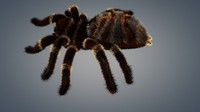 3d new spider tarantula hq model