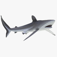 3d silky shark rigged model