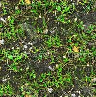 Forest ground 3
