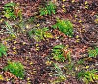 Forest ground 14