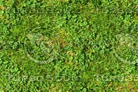 Grass with clover 5