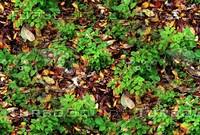 Forest ground 17