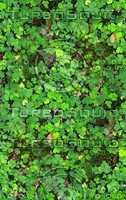 Groundcover 7