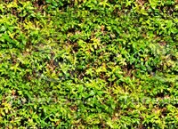 Groundcover 5