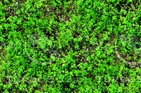 Groundcover 10