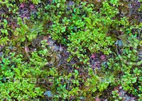Groundcover 2