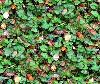Groundcover 6