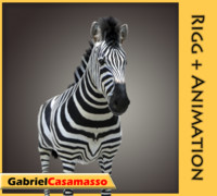 zebra animation 3d model