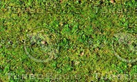 Mossy ground 21