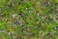 Mossy ground 12