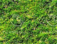Mossy ground 17
