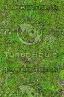 Mossy ground 2