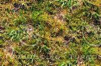 Mossy ground 16