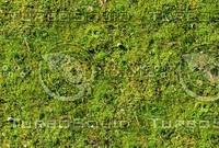 Mossy ground 13