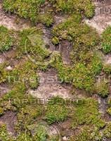 Mossy ground 14
