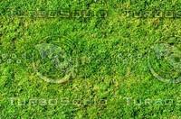 Mossy ground 1