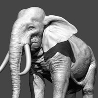 photorealistic elephant sculpted zbrush 3d model