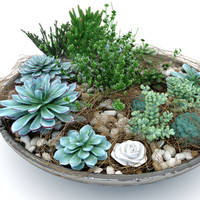 succulent composition plants