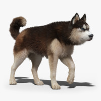 siberian husky 2 fur 3d model