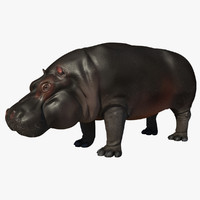 3d model hippopotamus open mouth