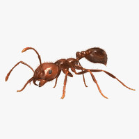 3d solenopsis invicta red ant
