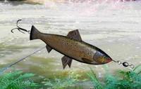 fishing lure salmon 3d max