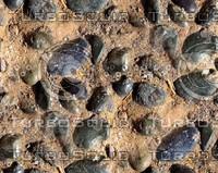 Sand with stones 10