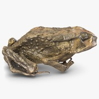dead frog 3d model