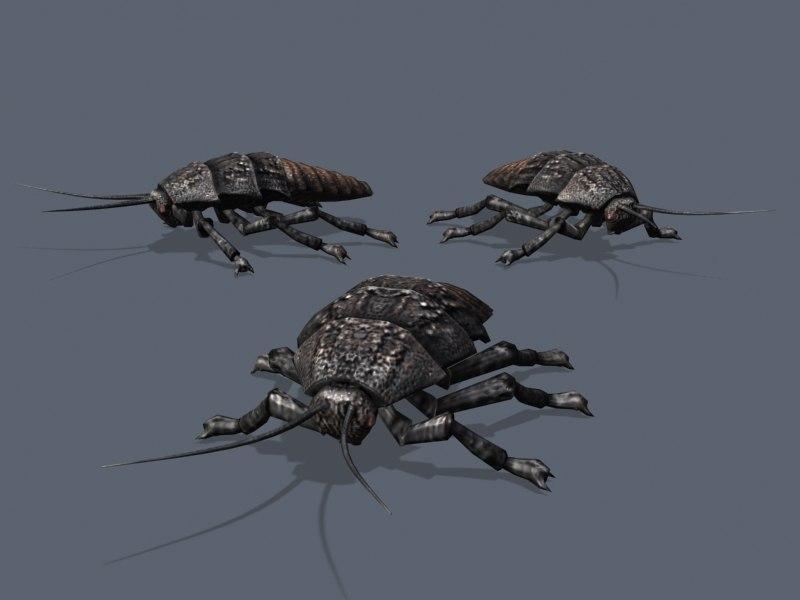 Roach_01.jpg