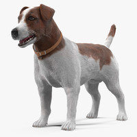 jack russell 3d max