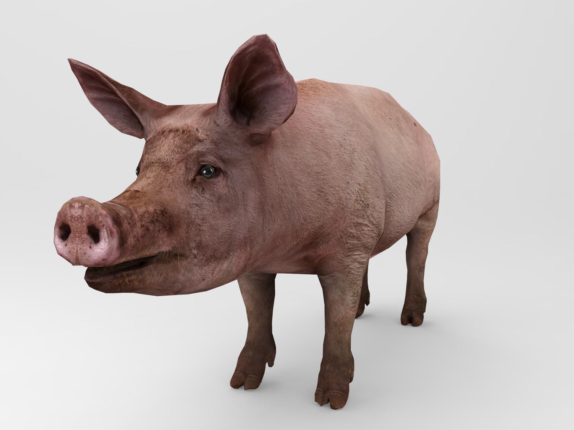 Pig.457.jpg