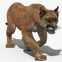 3d model puma animation cat