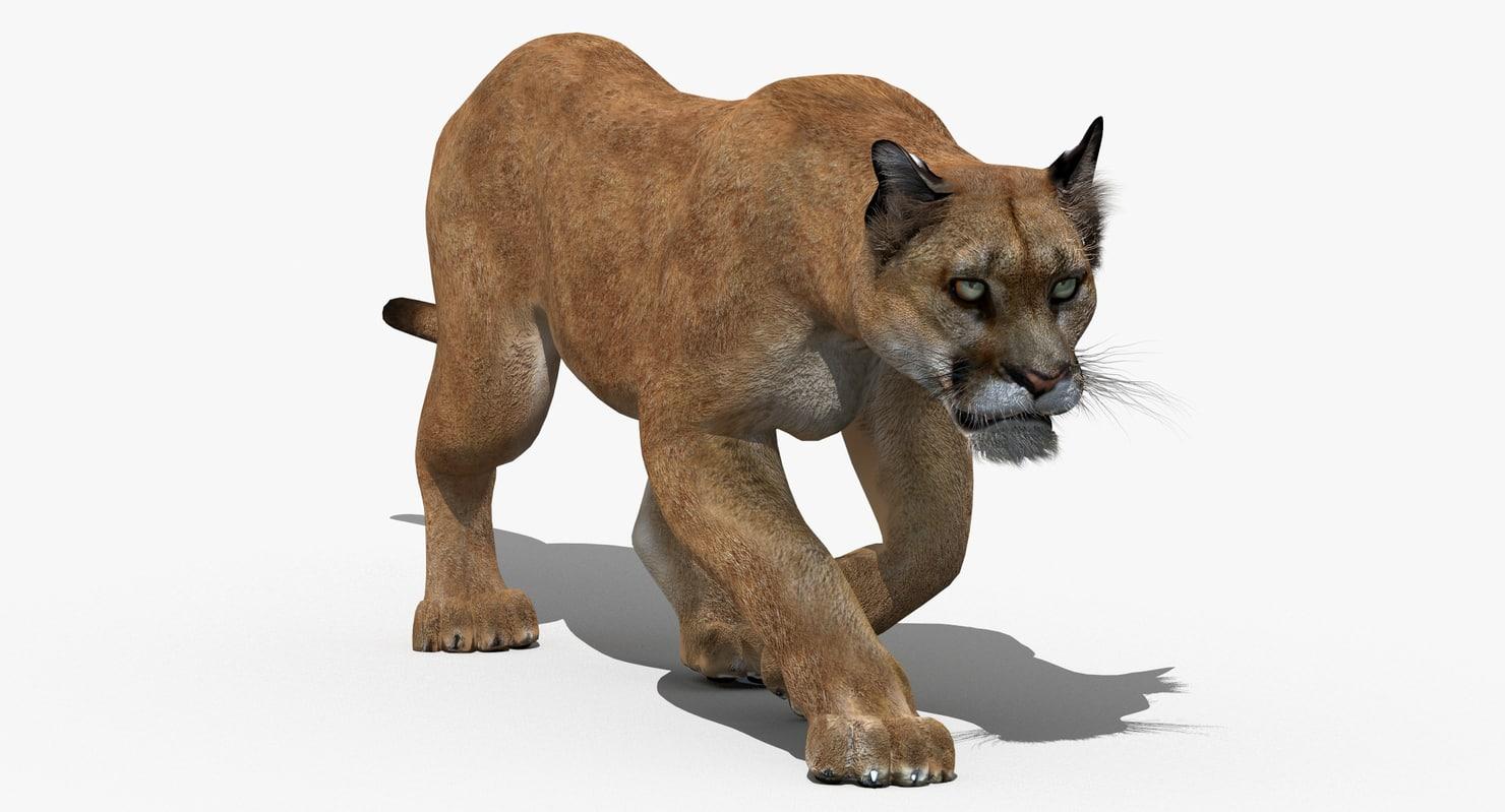 Puma-3D-model-animated-01.jpg