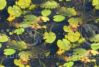 Lilypads 10