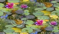 Lilypads 2