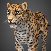 wild cheetah 3d model