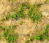 Cracked ground with weeds 1