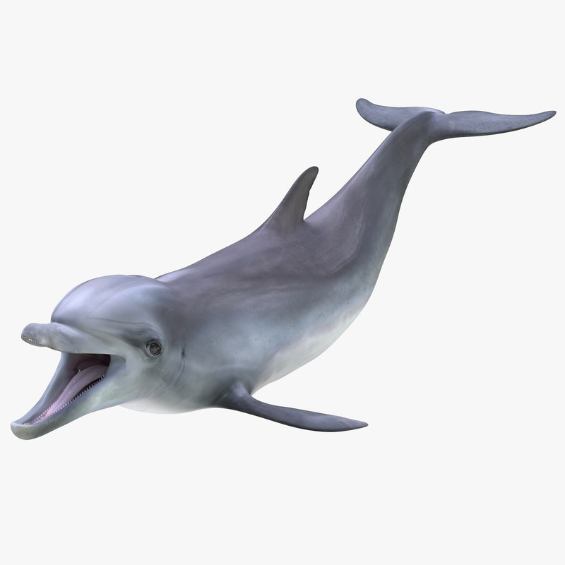 3d model of Dolphin 00.jpg