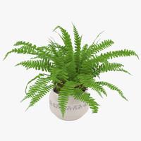 3d fern flower plant