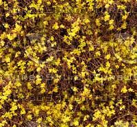 Flowering ground 2