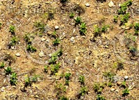 Dry soil with weeds 1