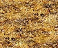 Dry grass 2
