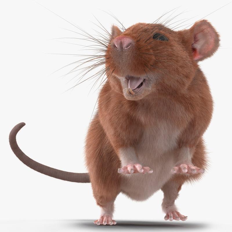 Rat Rigged 3d model 00.jpg