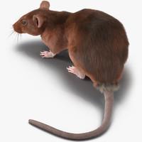 3d model rat 2 pose 5
