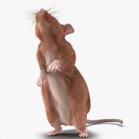 3d rat 2 pose model