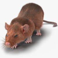 max rat 2 pose 3