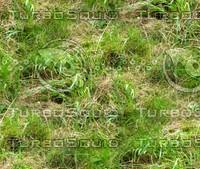 Wild grass 27