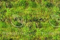 Wild grass 22